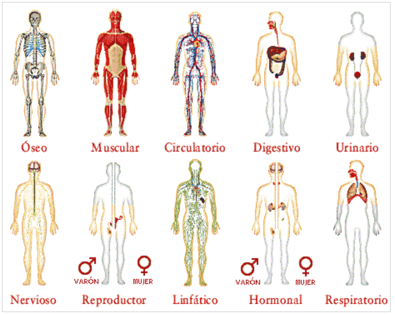 Exploración del cuerpo humano con simuladores y recursos TIC ...