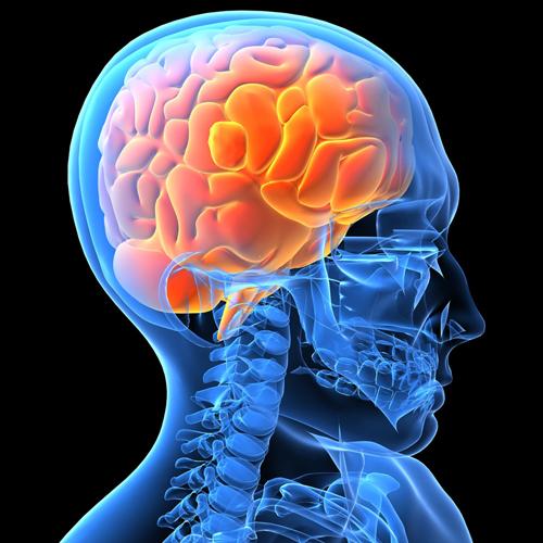 Clase de anatomía con \'BioDigital Human\' | Noticias de uso didáctico