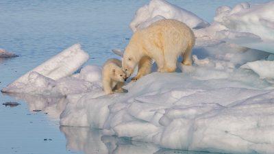 5 Apps imprescindibles para luchar contra el calentamiento global