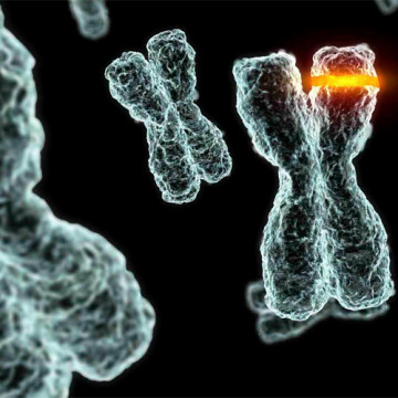 cromosoma.jpg