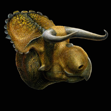 nasutoceratops.jpg